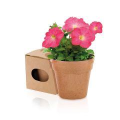 Maceta Advert Flores Colores Surtidos. 5-8 Semillas de Petunia Incluidas Macetero Biodegradable